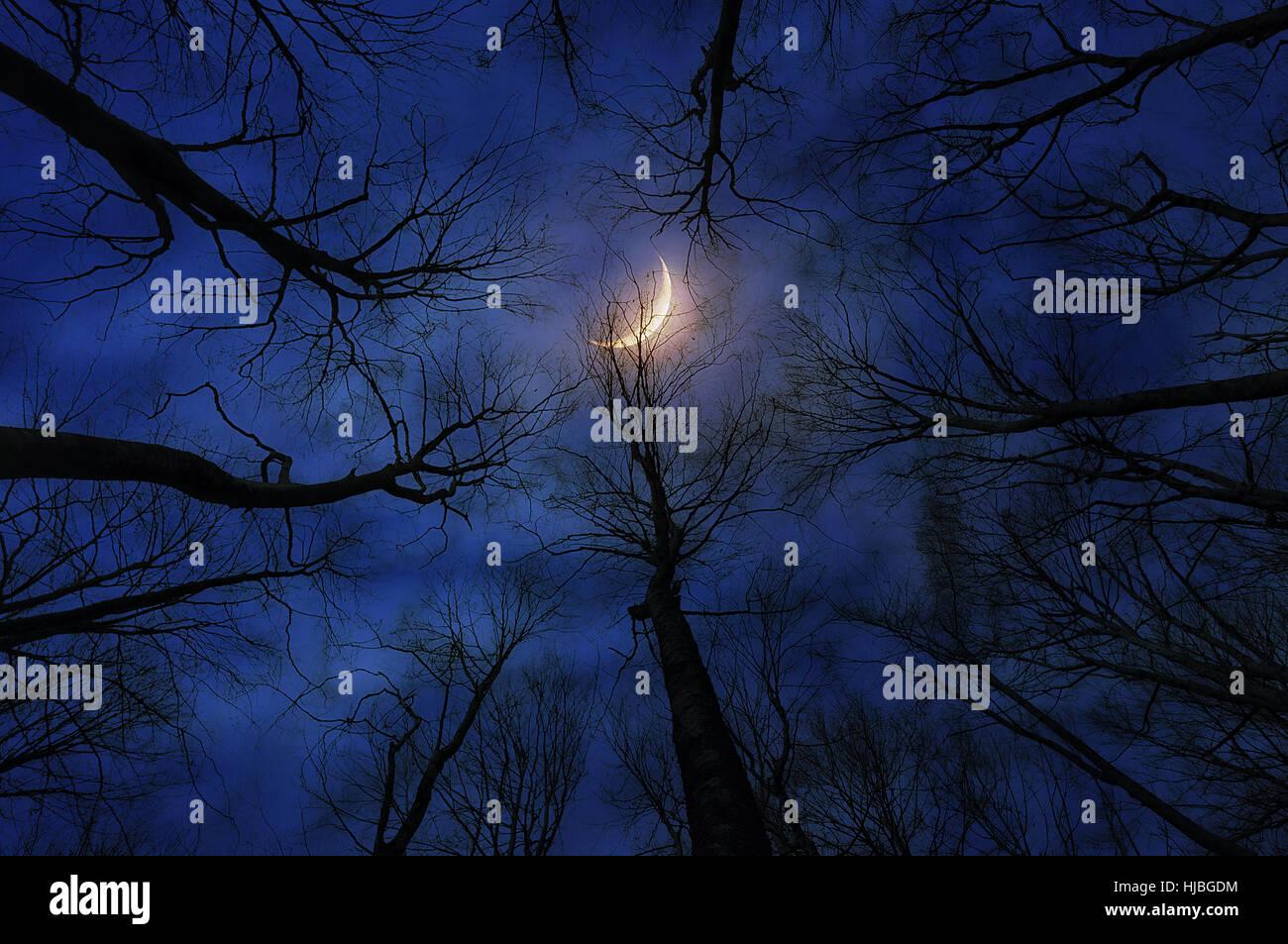 Forêt d'horreur avec lune de nuit Photo Stock