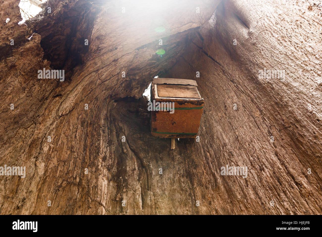 hollow baobab photos hollow baobab images alamy. Black Bedroom Furniture Sets. Home Design Ideas