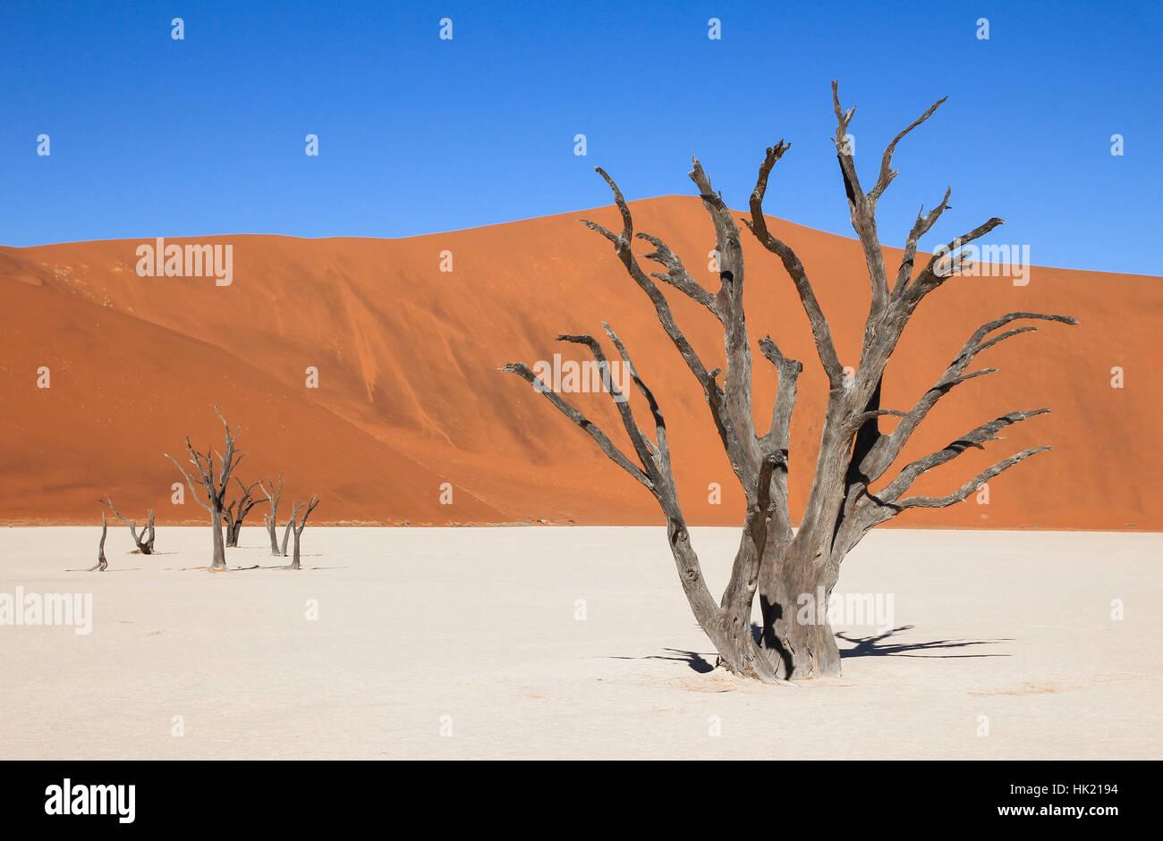 La ville pittoresque de Sossusvlei et Deadvlei. Gros sel et d'argile avec arbres d'Acacia tressé entouré par de majestueuses dunes de sable. Banque D'Images
