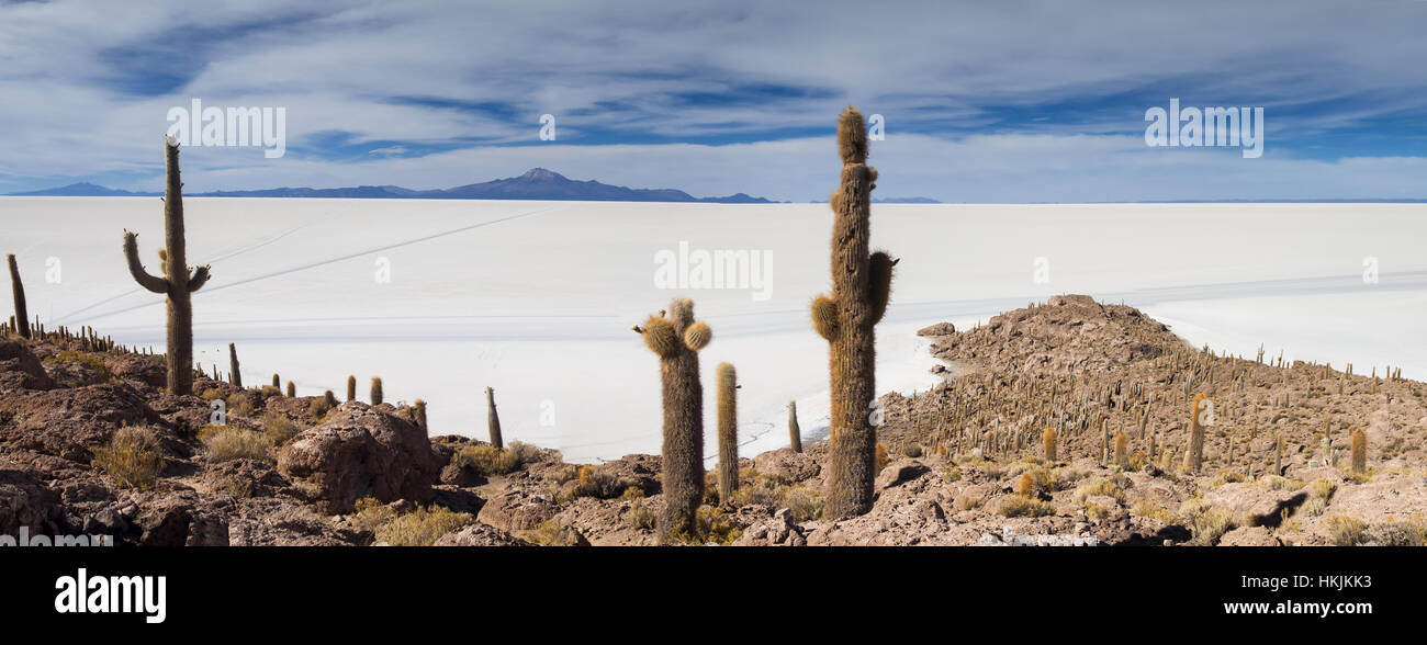 Panorama de Salar de Uyuni vu de Isla Incahuasi, Bolivie Photo Stock
