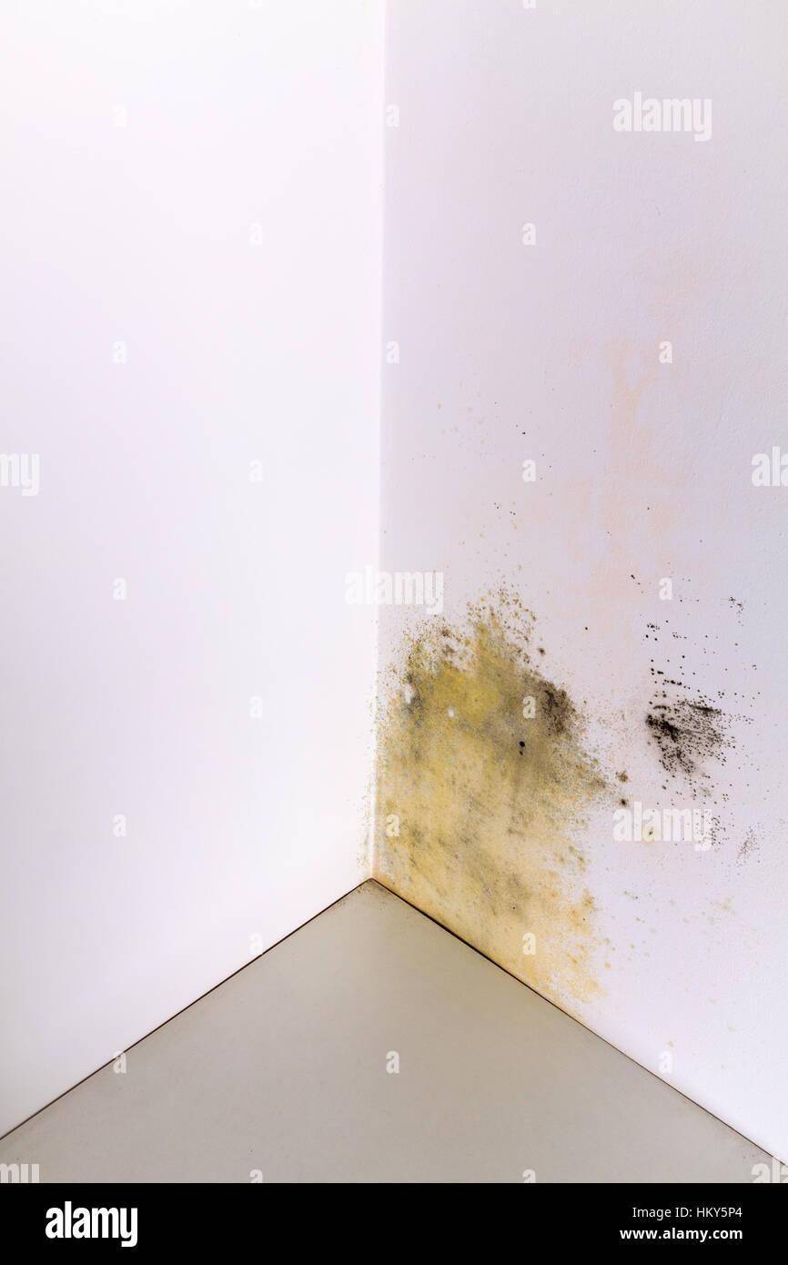 Humidité Dans Une Maison l'accumulation d'humidité et moisissures sur coin mur d'une