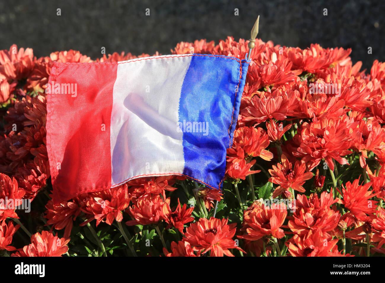 Chrysanten et drapeau Français. Photo Stock