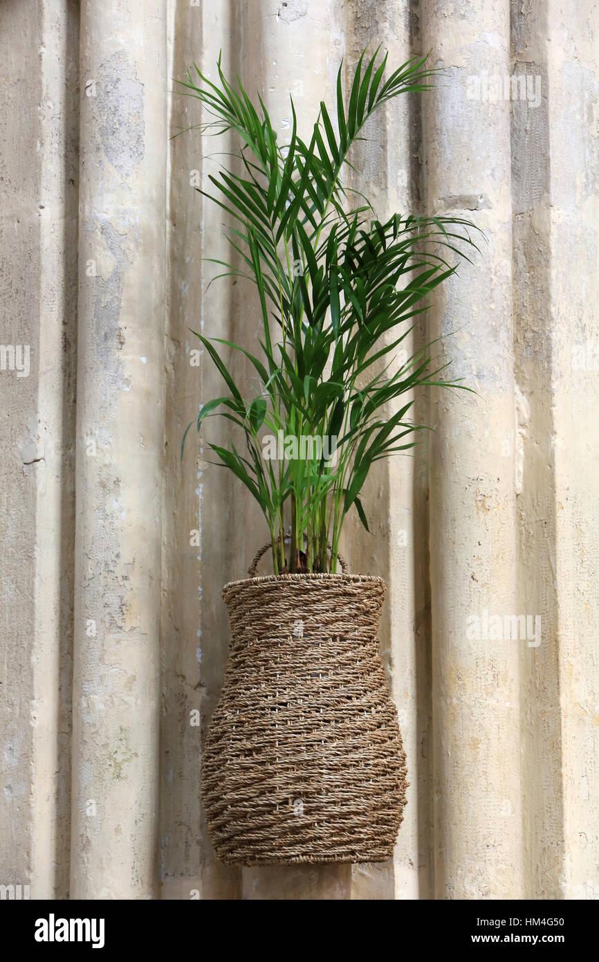 Plante. Dimanche des Rameaux. Photo Stock