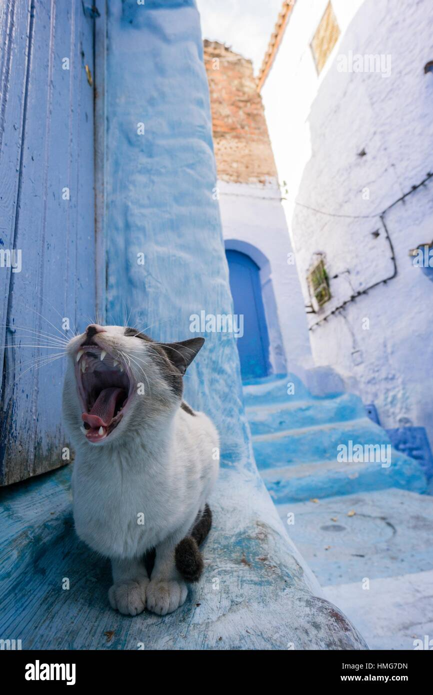 rencontre pour femme marocaine strathcona