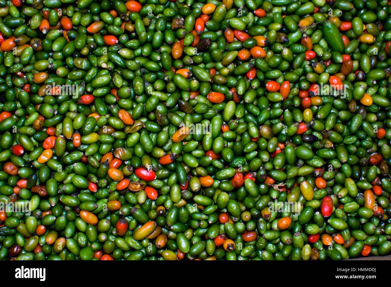 Poivrons rouges et verts sur un marché Photo Stock