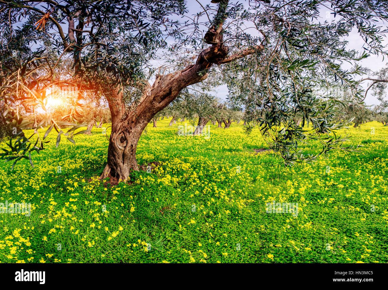 Fleurs jaunes dans le jardin en fleurs Banque D'Images