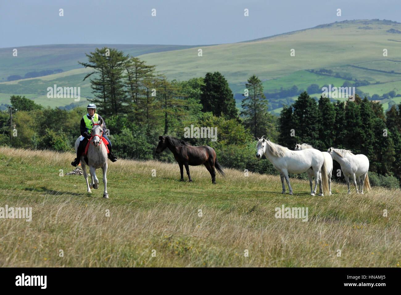 Le cheval et le cavalier sur l'endurance ride Photo Stock