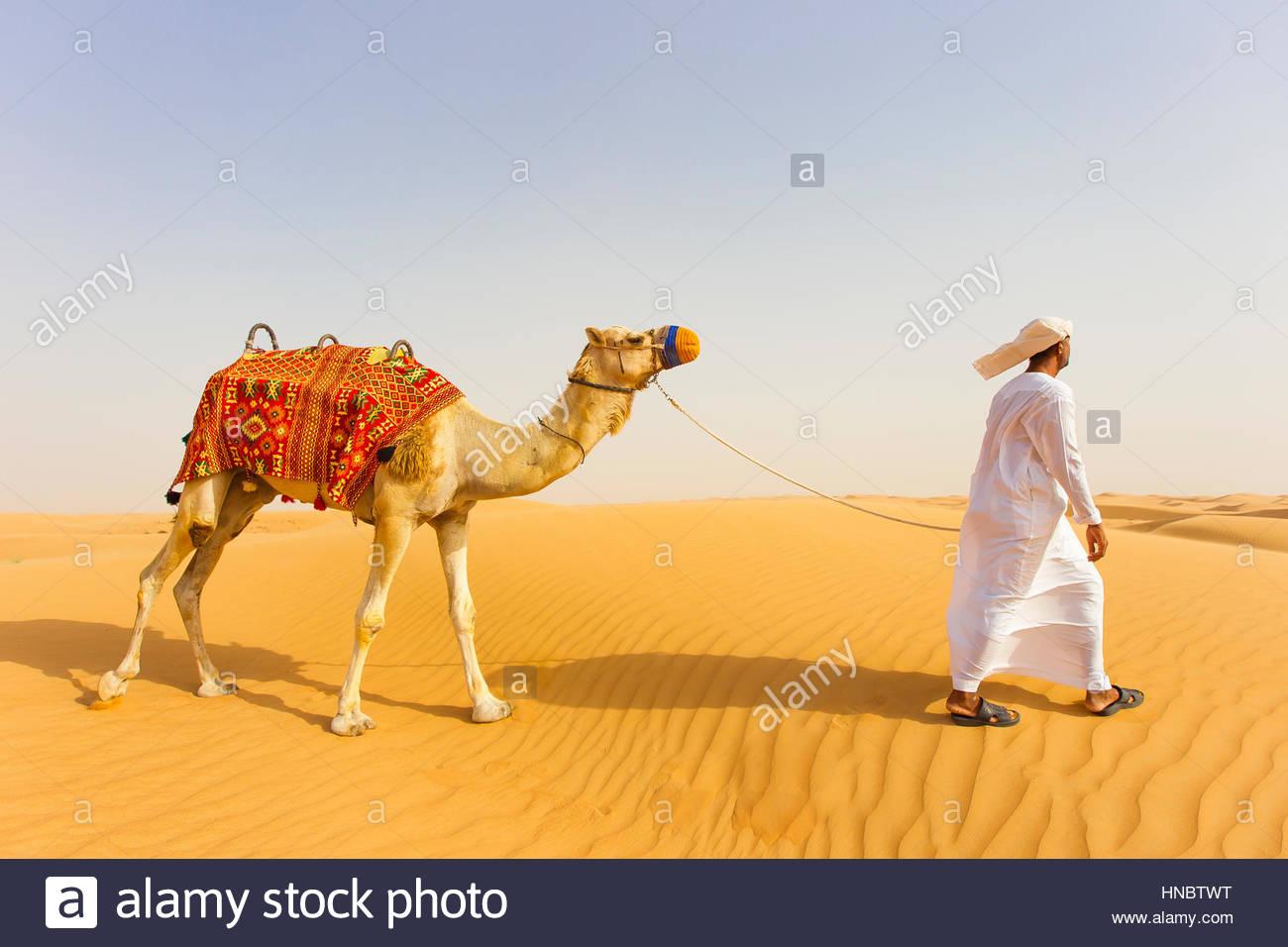 Un homme qui marche un chameau au Dubai Desert Conservation Reserve. Photo Stock