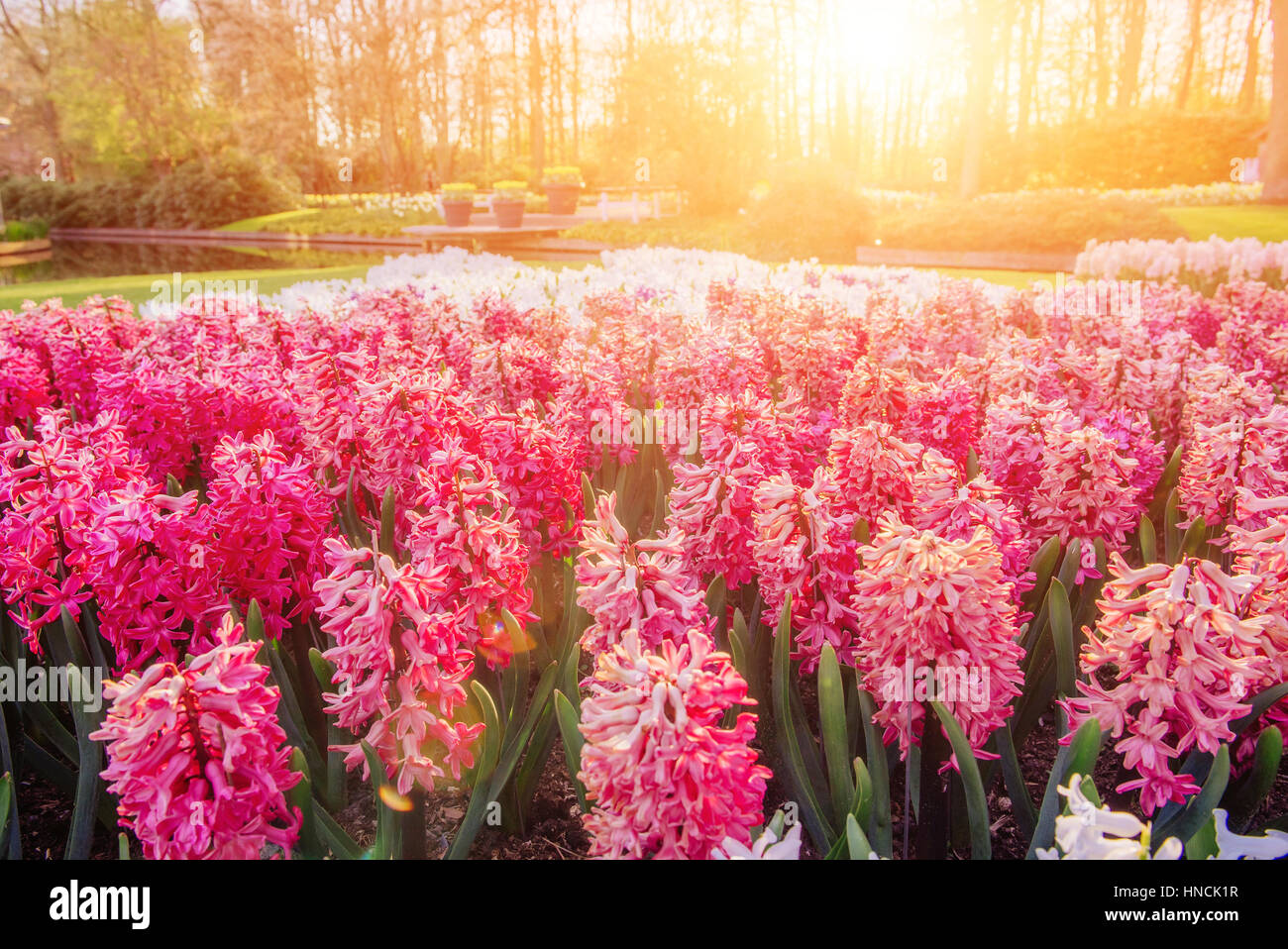 Parterres de fleurs dans le parc. Photo Stock