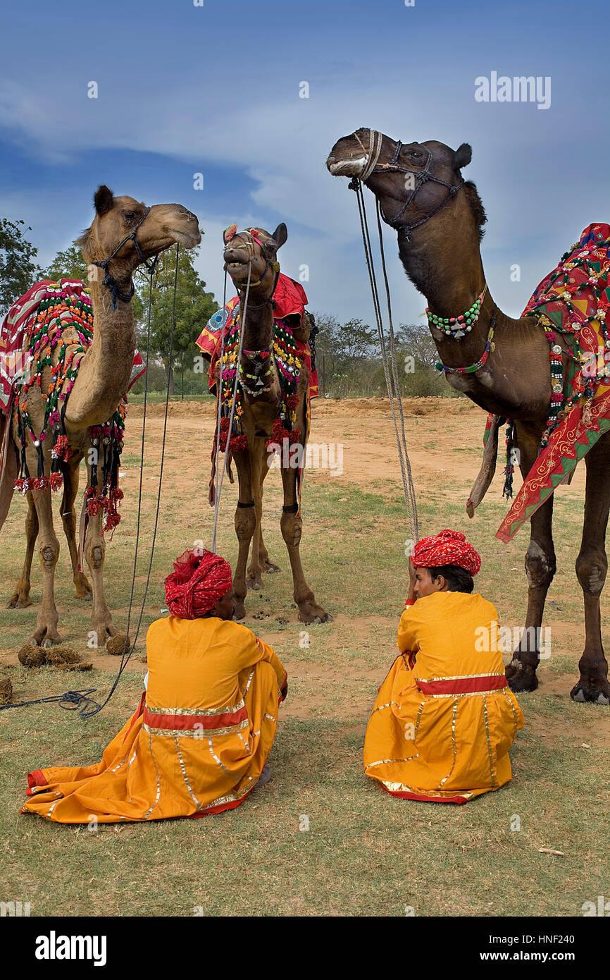 Dromadaire chameau, chameaux, dromadaires, éléphants,pendant le Festival Jaipur, Rajasthan, Inde Photo Stock