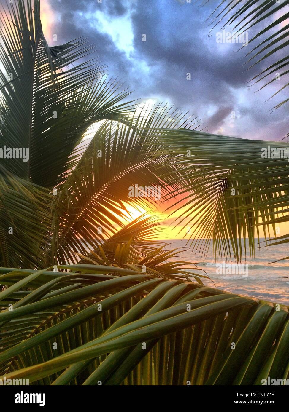 Coucher de soleil sur Seven Mile Beach, en Jamaïque. Vu par un palmier. Photo Stock
