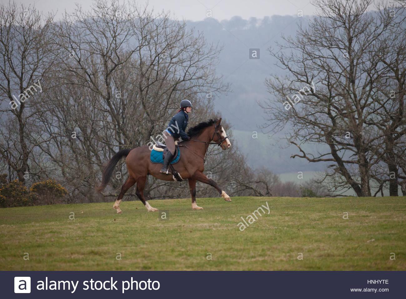 Blackdown Hills, l'est du Devon, Royaume-Uni. 14 février 2017. Cheval et cavalier bénéficiant Photo Stock