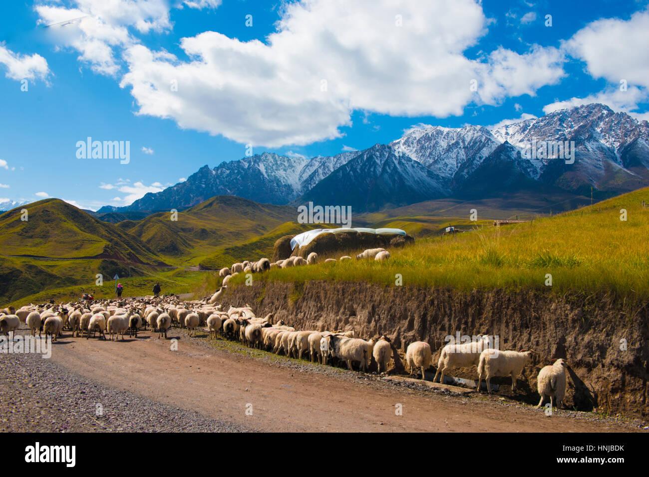 Les ovins et les éleveurs dans les montagnes Qilan, Province de Gansu, Chine, l'ouest de la Chine, près Photo Stock