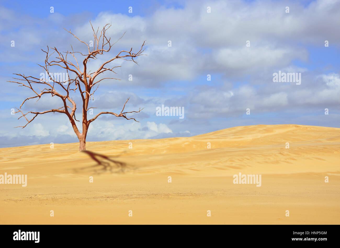 Arbre mort dans des dunes de sable désertes sous ciel bleu. La sécheresse, le changement climatique et concepts. Banque D'Images