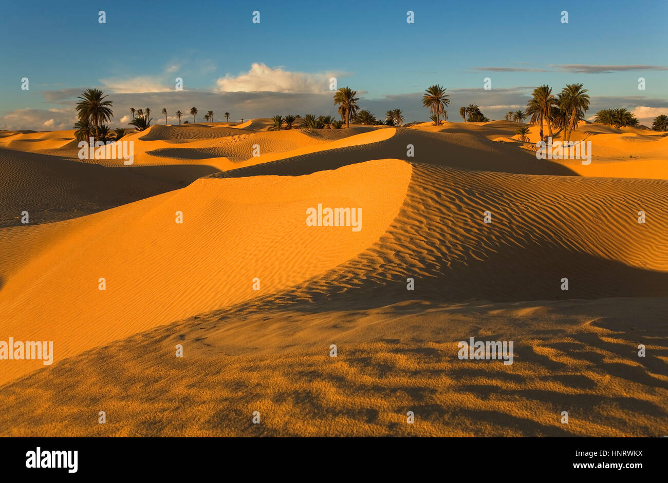 Tunisie.zaafrane douz (désert). Photo Stock