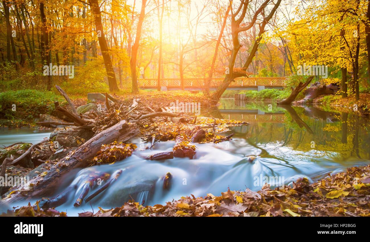 Rivière et forêt en automne Photo Stock