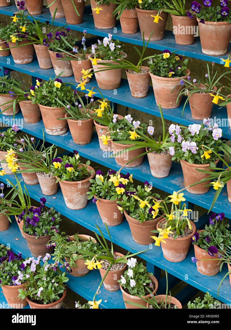 Fleurs De Printemps Dans Des Pots En Terre Cuite Sur Des étagères En
