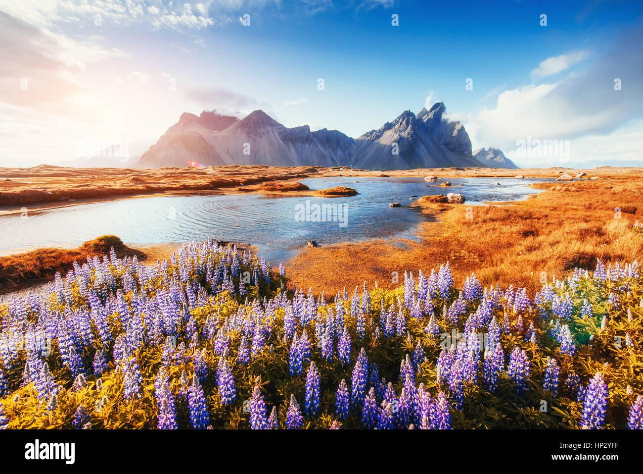 Les paysages pittoresques forêts et montagnes de l'Islande. Photo Stock