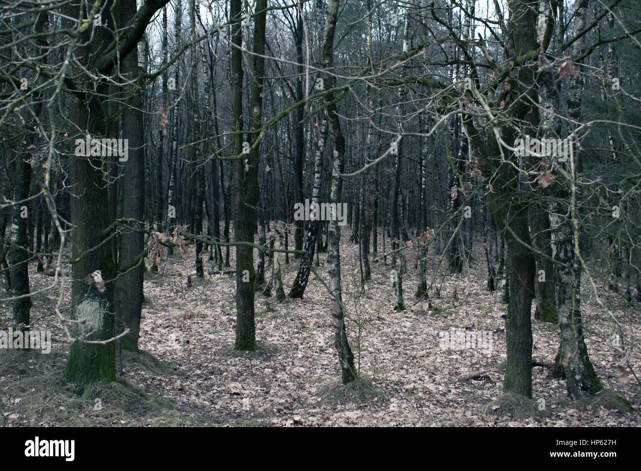 Court voyage dans une petite forêt aux Pays-Bas à la fin de l'hiver. Photo Stock