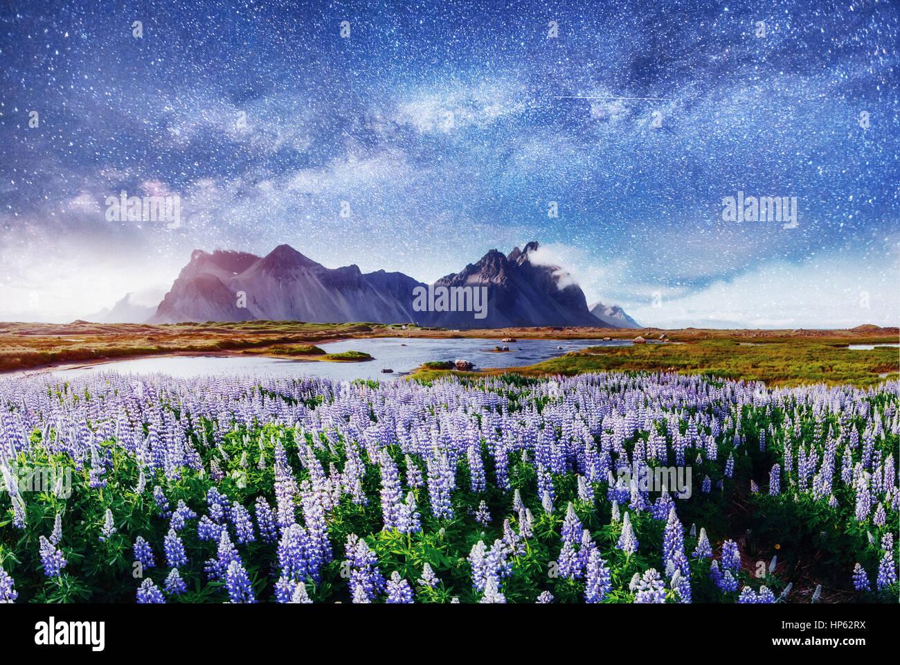 Les pittoresques paysages de forêts et de montagnes de l'Islande. Photo Stock