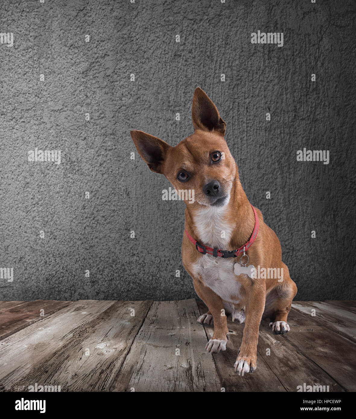 Chien avec expression interrogateur Photo Stock