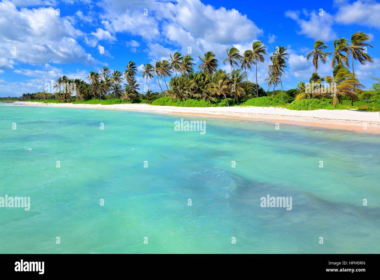 Scieries de plage de sable blanc avec des palmiers. Punta Cana, République Dominicaine Photo Stock