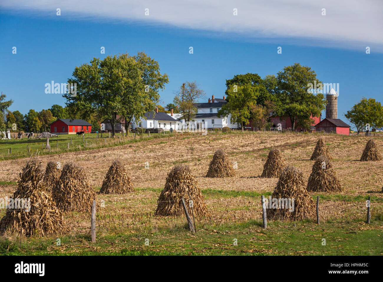 Un Amish farm avec chocs de maïs dans le champ près de Kidron, Ohio, USA. Banque D'Images