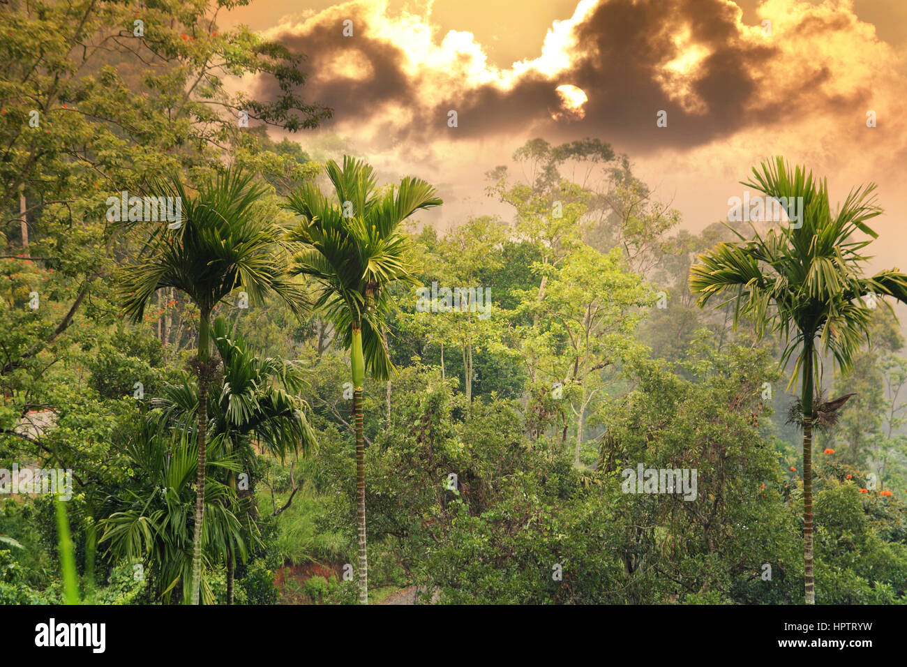 Sunset in jungle Photo Stock
