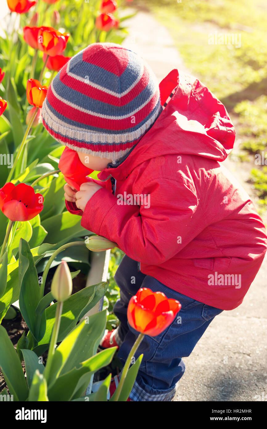 ea844f85acff8 Petit enfant qui sent les tulipes sur la fleur lit dans un beau jour de  printemps