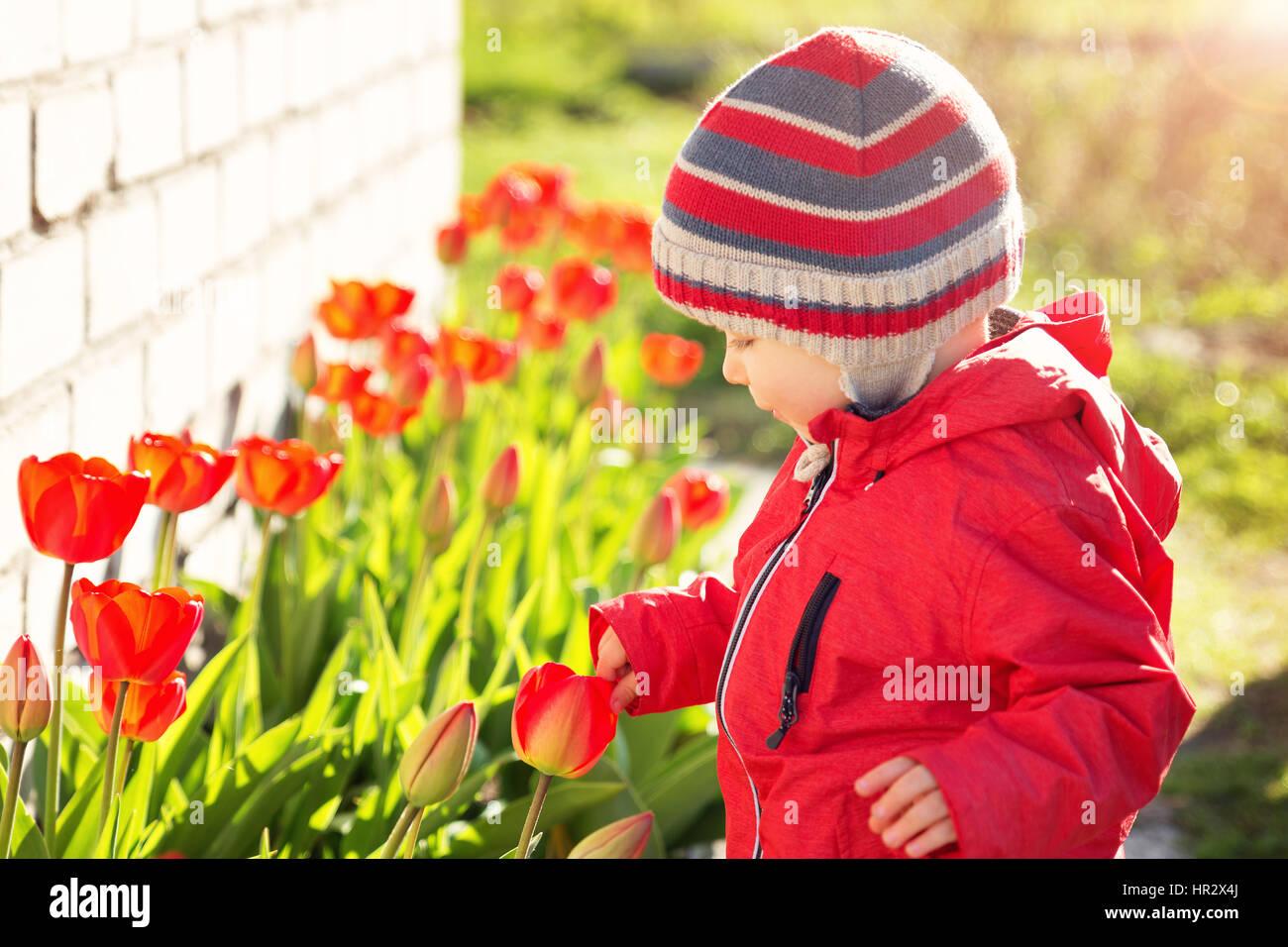 7b553a28b64ab Petit enfant qui sent les tulipes sur la fleur lit dans un beau jour de  printemps. Baby Boy en plein air dans le jardin