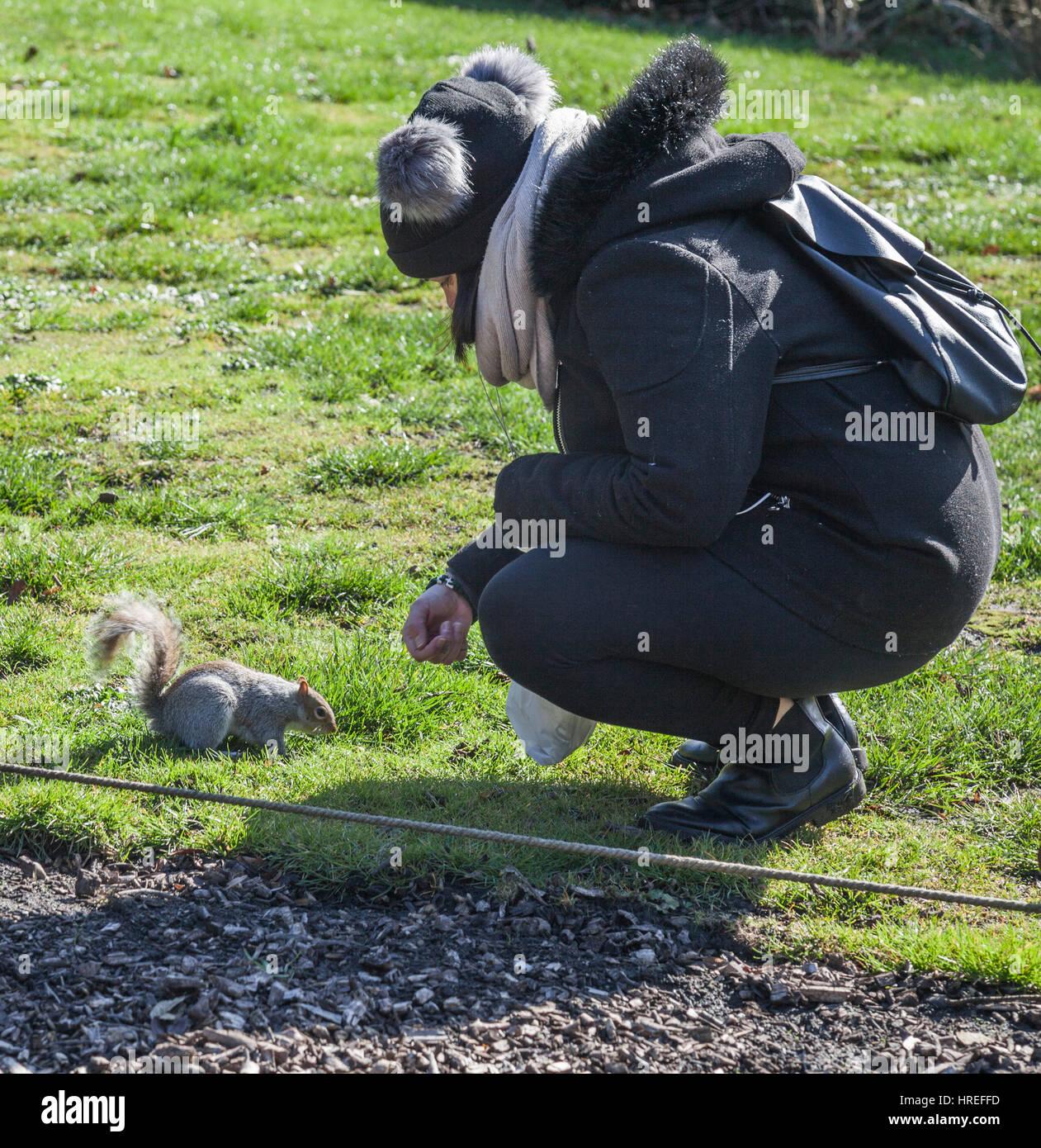 L'écureuil gris dans le parc à York, Angleterre Photo Stock