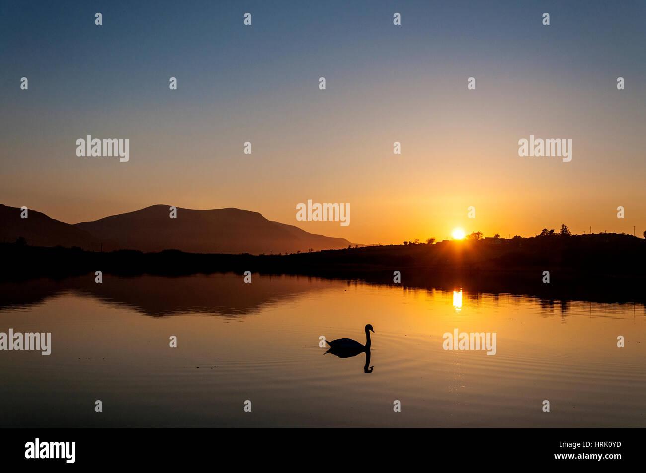 Encore calme paisible lac avec swan au coucher du soleil Photo Stock
