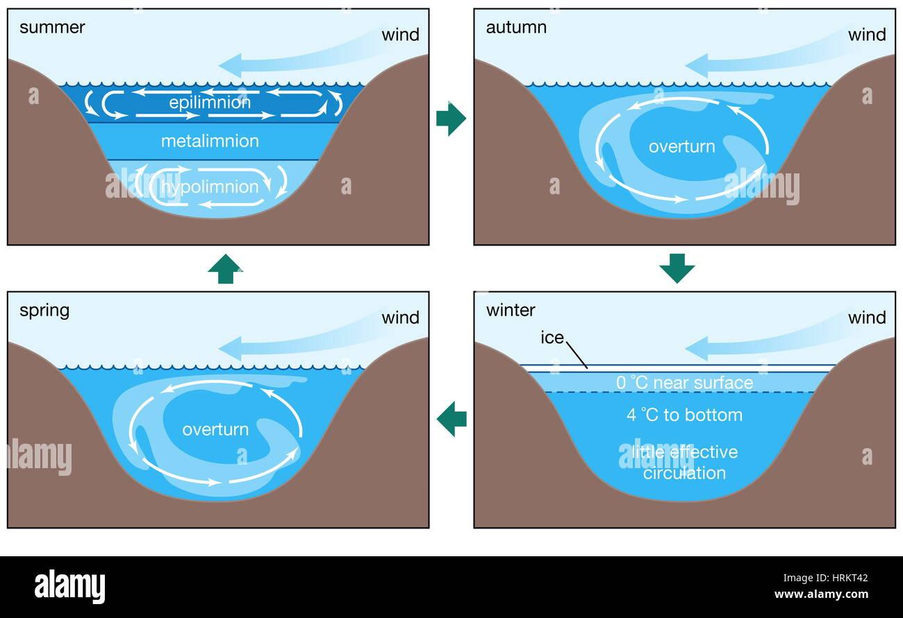 Les régimes de circulation annuelle dans un lac dimictique. épilimnion, métalimnion, la biosphère, Photo Stock