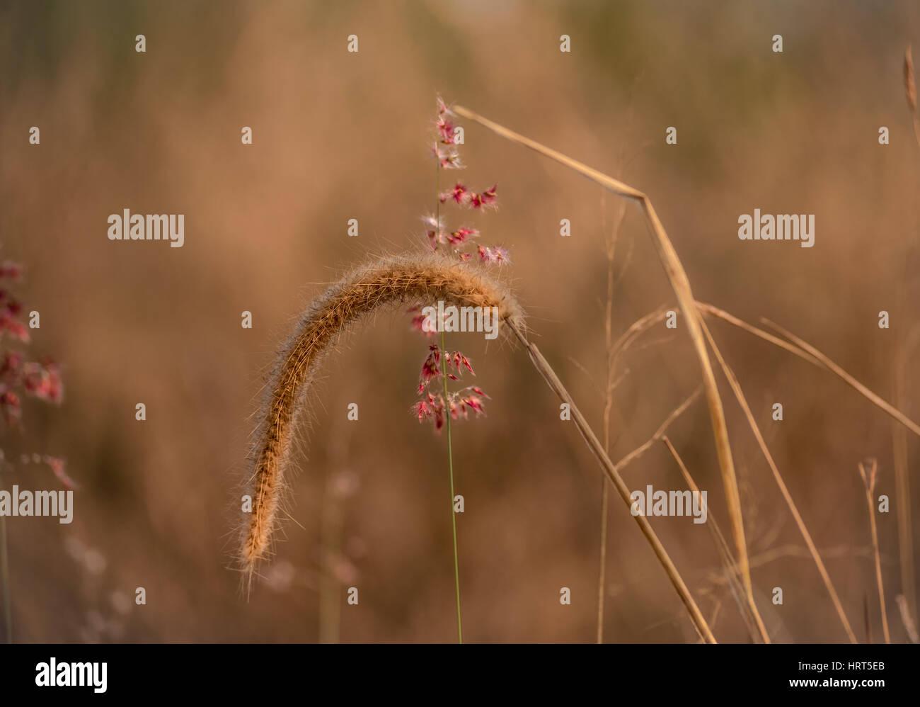 La beauté dans la simplicité Photo Stock