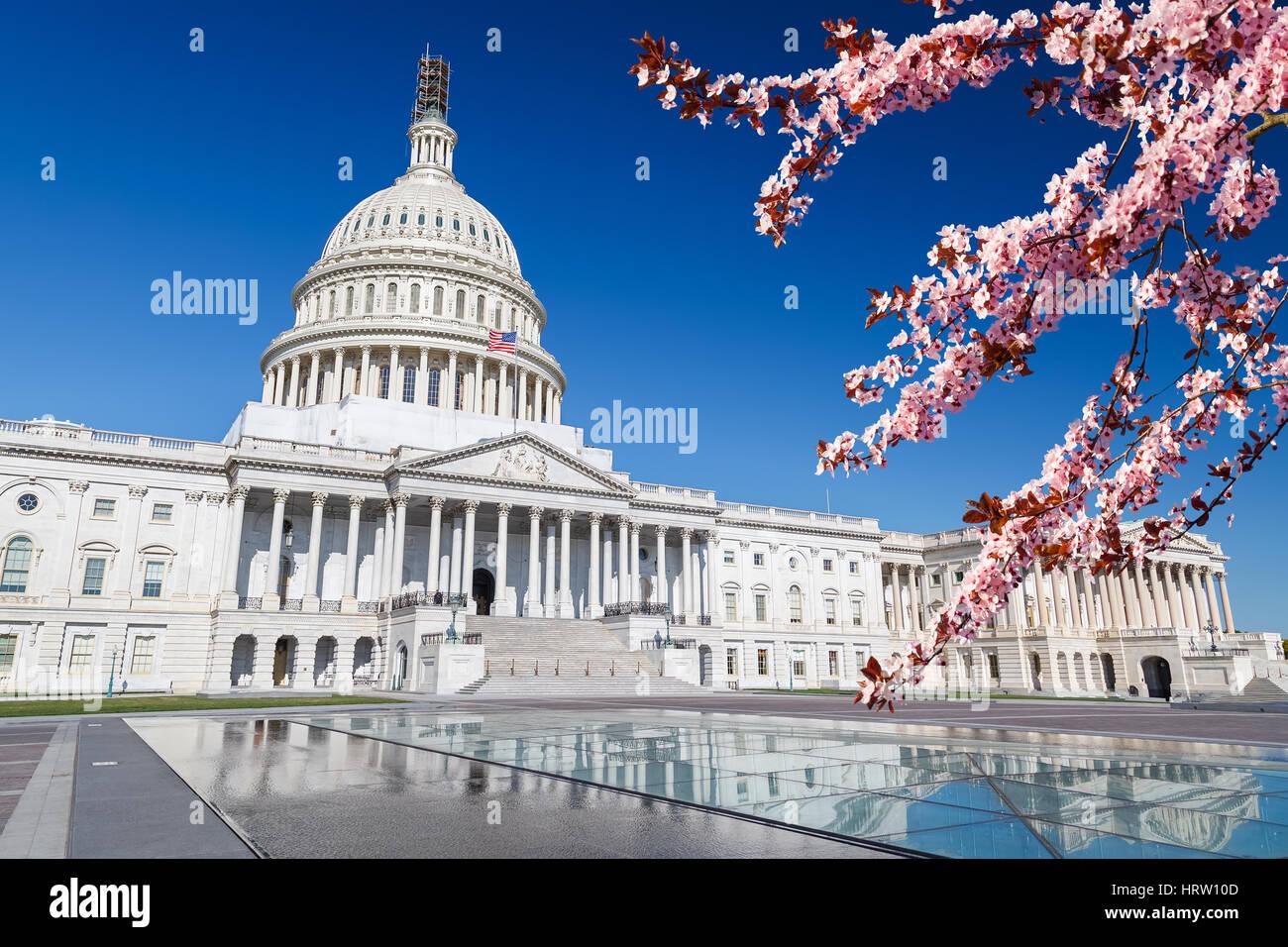 Capitole plus de ciel bleu avec blooming cherry sur foregraund Banque D'Images