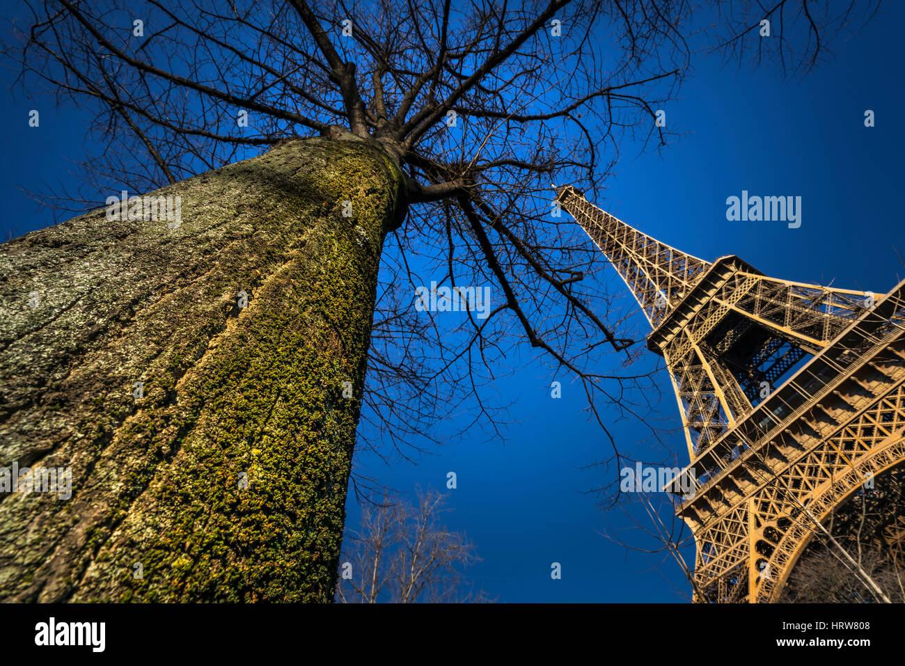 Tour Eiffel et Big Tree Photo Stock
