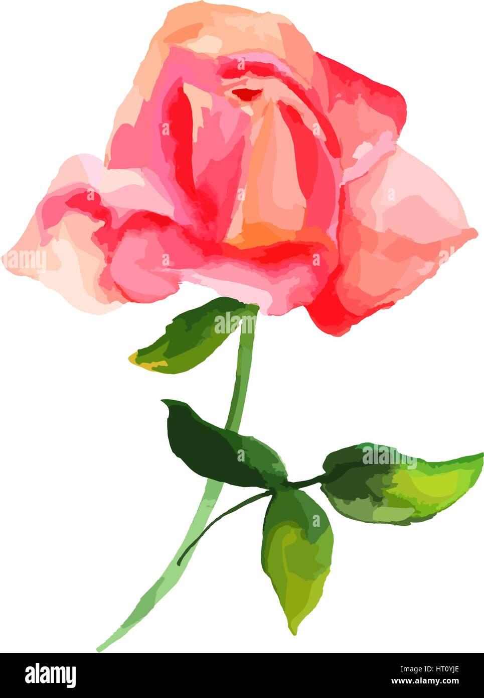 Scenario Et Dessin Aquarelle De Fleurs Rose Rouge Resume Vecteurs