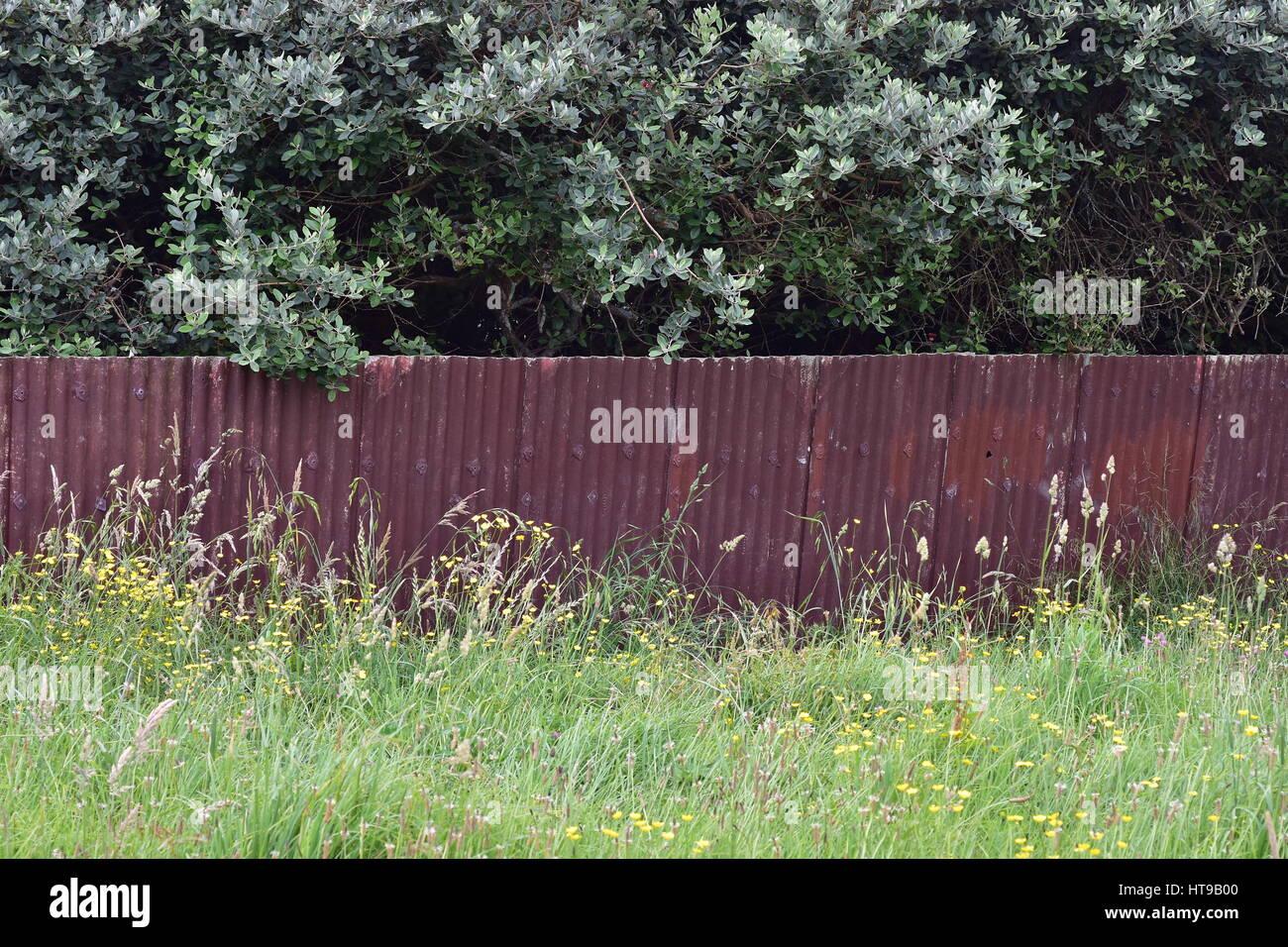 Panneaux de clôture faite de tôle ondulée rouillée avec herbe devant et derrière les arbres. Banque D'Images