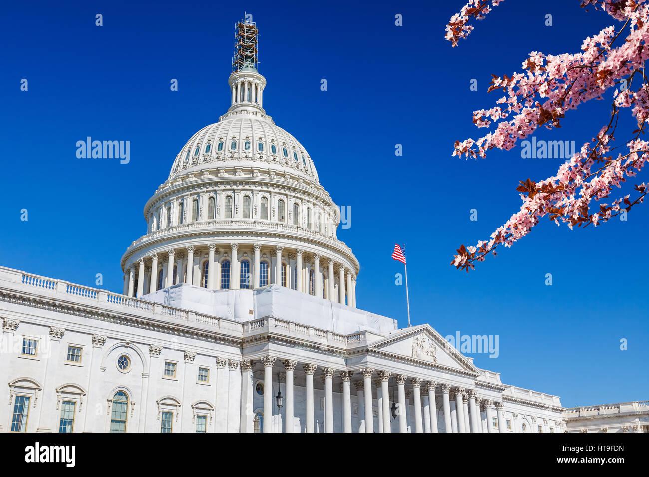 Capitole plus de ciel bleu avec blooming cherry on foreground Banque D'Images