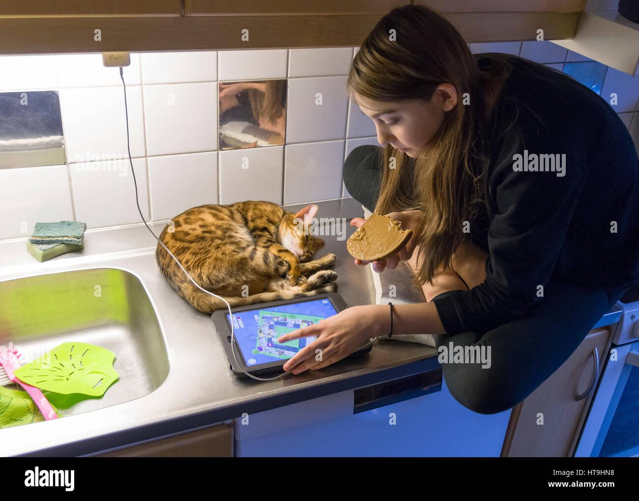 Teenage girl using et à l'iPad à l'assis sur le comptoir de cuisine avec animal chat Bengal à Photo Stock