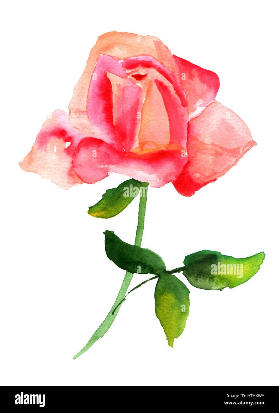 Une Aquarelle Dessin D Une Fleur Rose Rose Tendre Sur Fond Blanc L