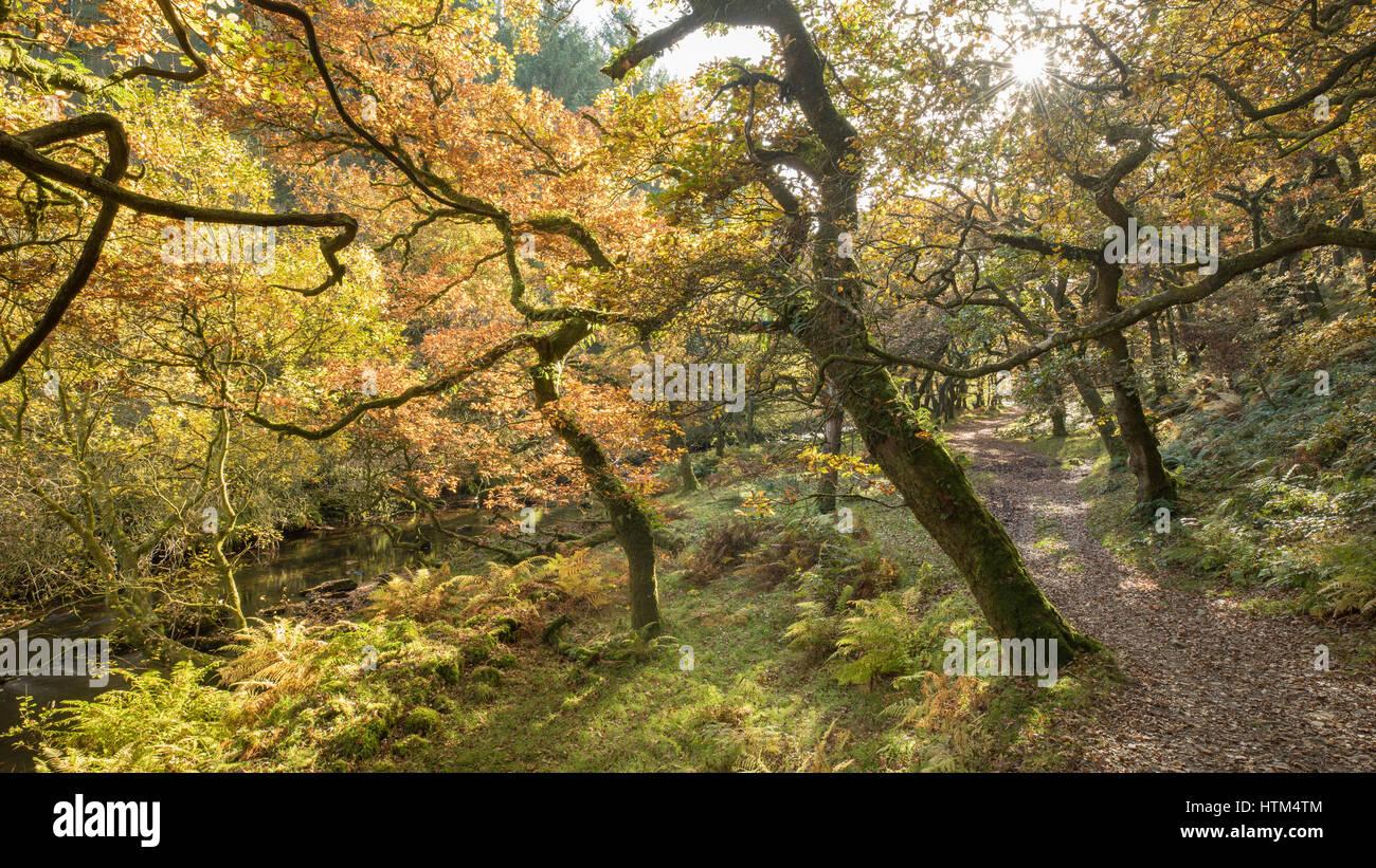 Couleurs d'automne sur les bords de l'eau, l'Badgworthy Doone Valley, Parc National d'Exmoor, Devon, England, UK Banque D'Images