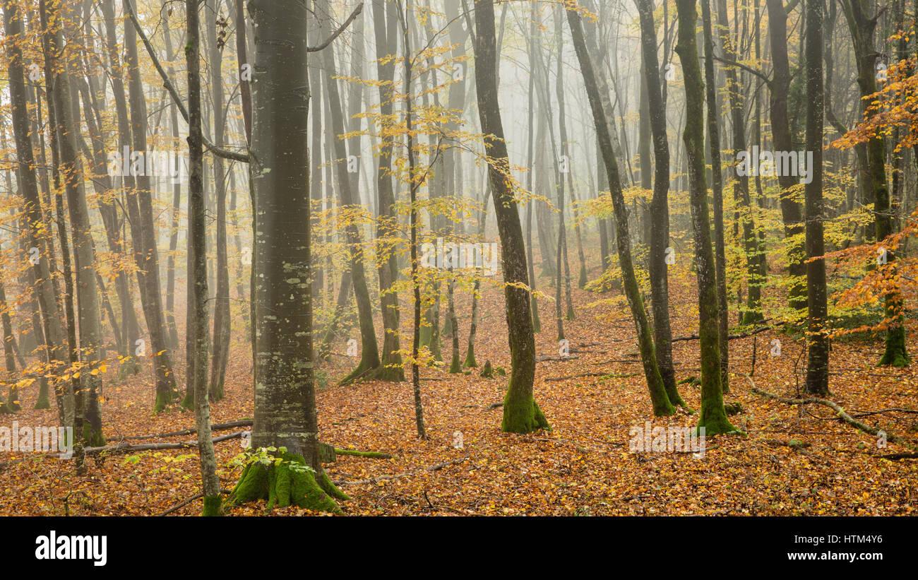 Bois d'automne brumeux nr de Baume-les-Messieurs, Jura, Franche-Comté, France Banque D'Images