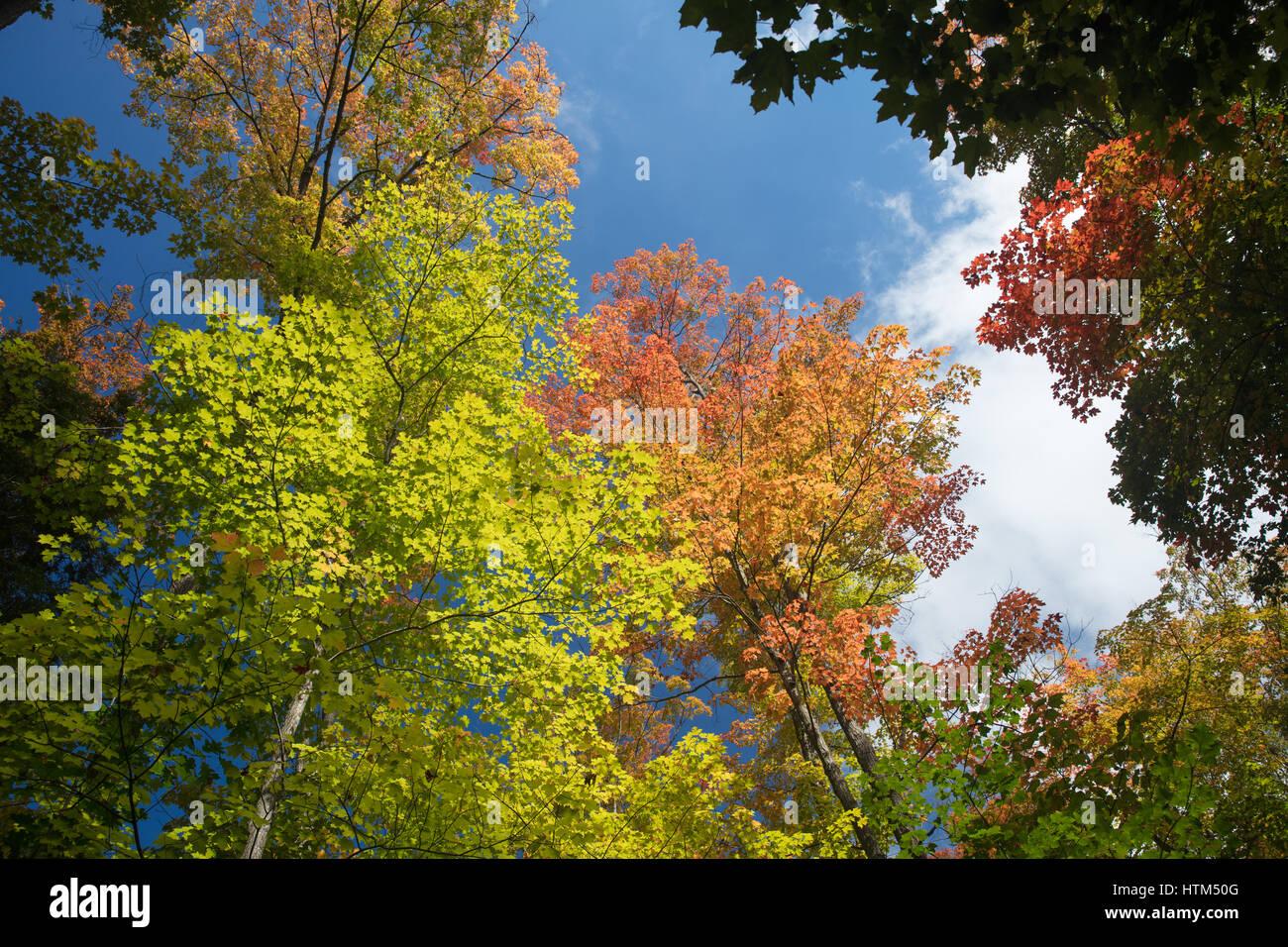 Couleurs d'automne dans les bois près de Grace Lake, Killarney Provincial Park, Ontario, Canada Banque D'Images
