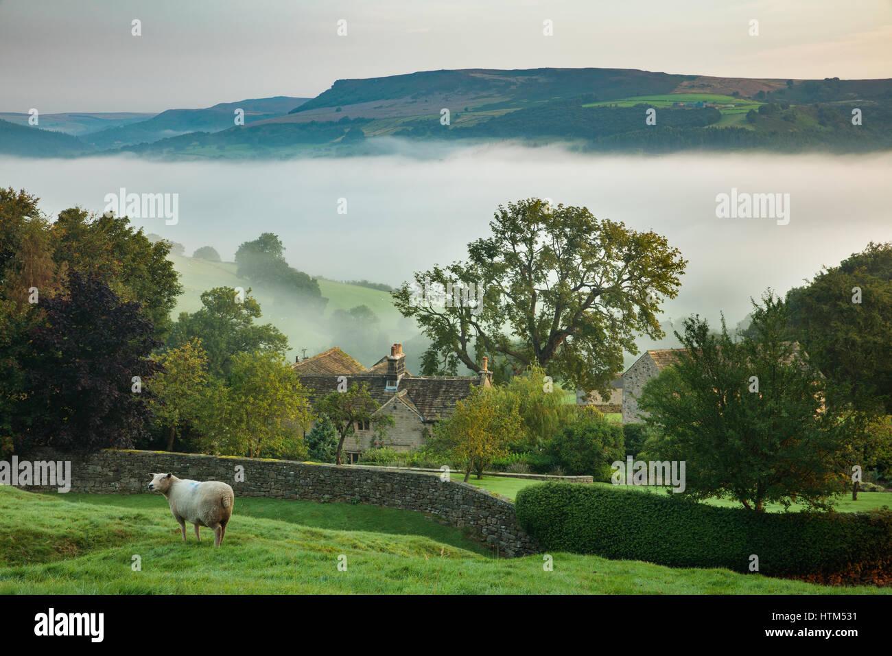 Des moutons paissant près de Offerton Hall au-dessus du brouillard dans la vallée de la Derwent, ci-dessous, Derbyshire Peaks District, England, UK Banque D'Images