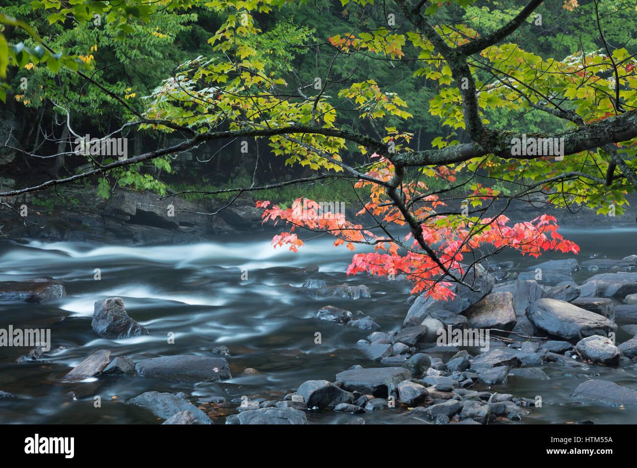 Couleurs d'automne le long de la rivière Oxtongue Oxtongue, Rapids Park, Ontario, Canada Banque D'Images
