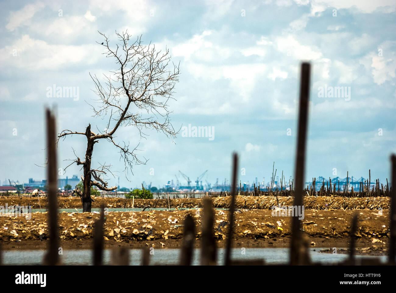 Vue d'un terrains du nord de Jakarta, Indonésie. Reynold © Sumayku Photo Stock