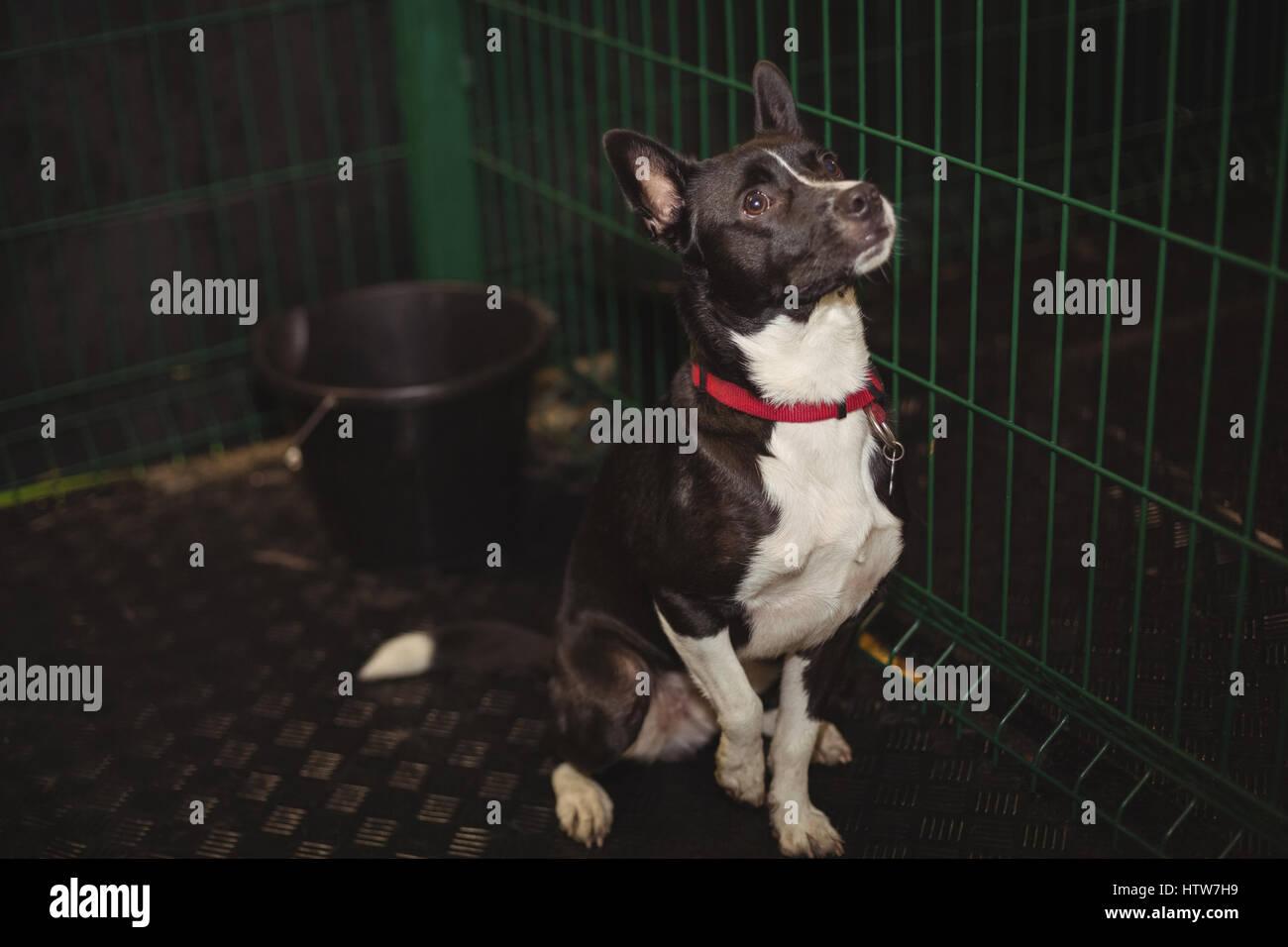 Cage à chien curieux Photo Stock