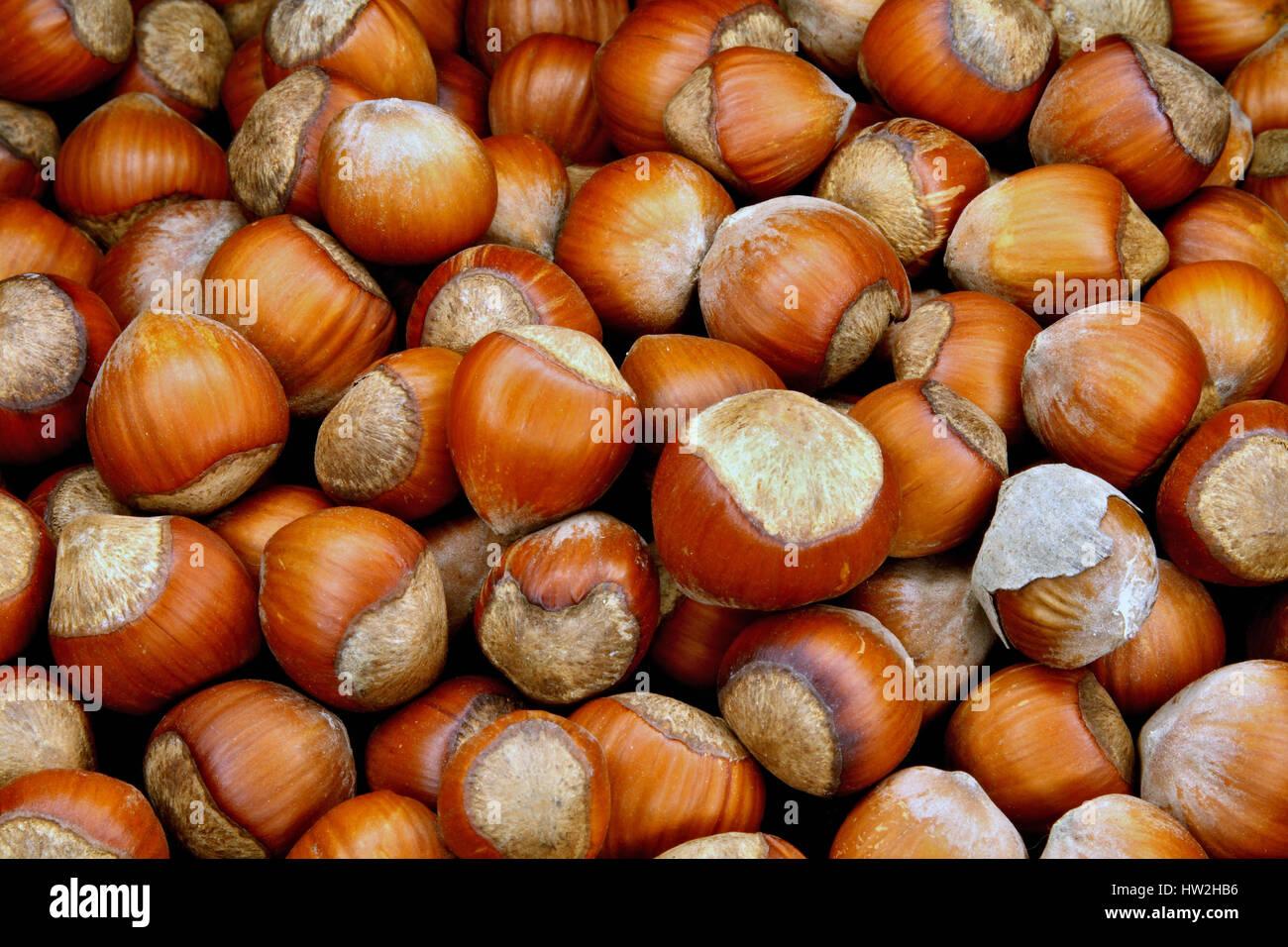 Les écrous de bois-utile une délicatesse et un produit savoureux Photo Stock