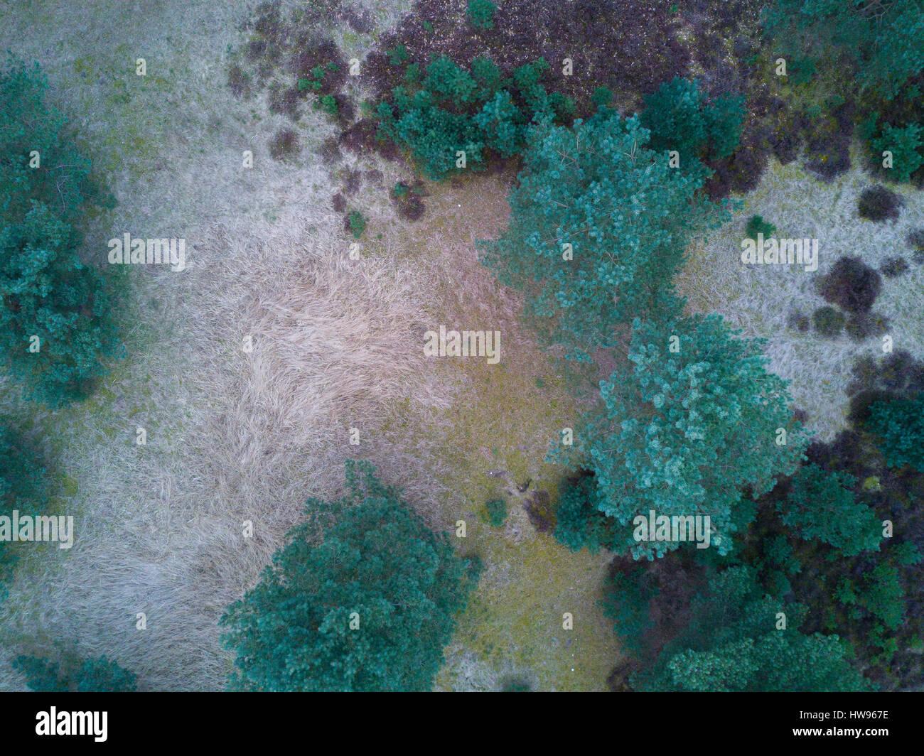 Le verticale aérienne pour la nature des structures et des couleurs du paysage moor en début du printemps Photo Stock